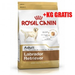 Labrador Retriever Adult 12 Kg